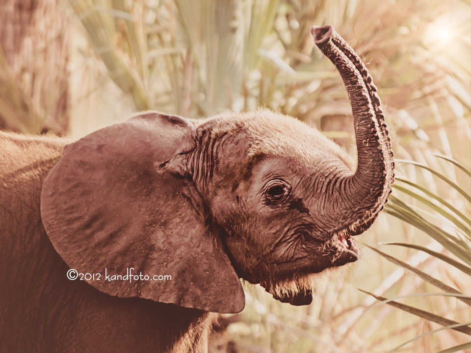 Elephant Threat