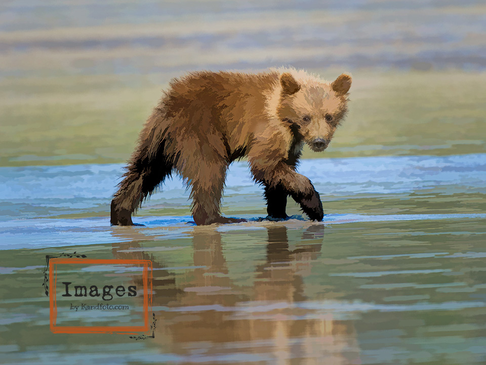 Baby_Bear-clamming-oil.jpg