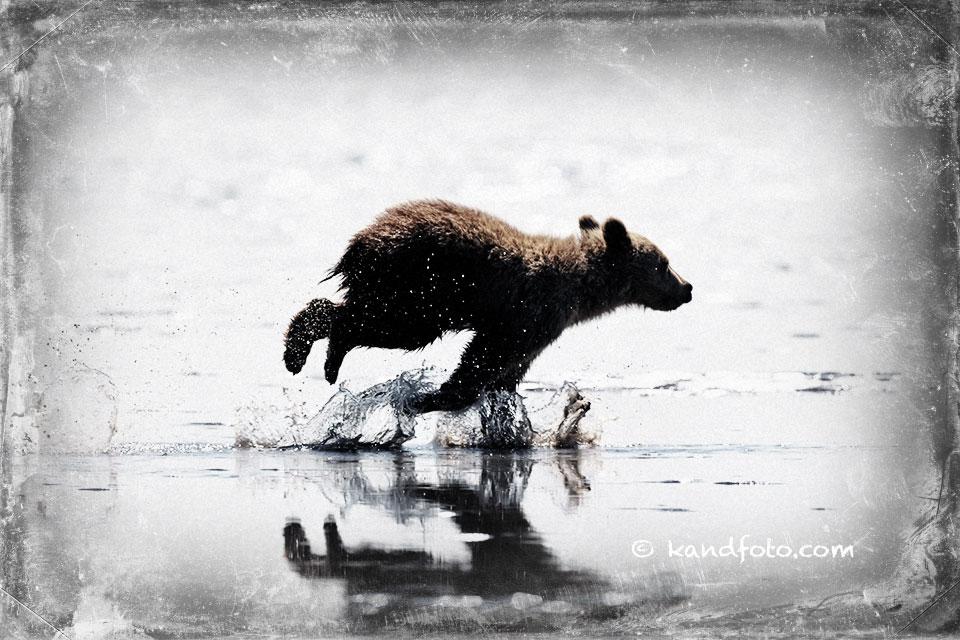Cub_running.jpg