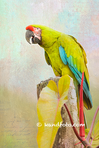 Artistic - Green Macaw